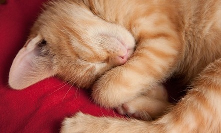 10 Ways to Get Better Sleep (And Be More Successful)